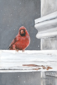 Franks Cardinal LRsm